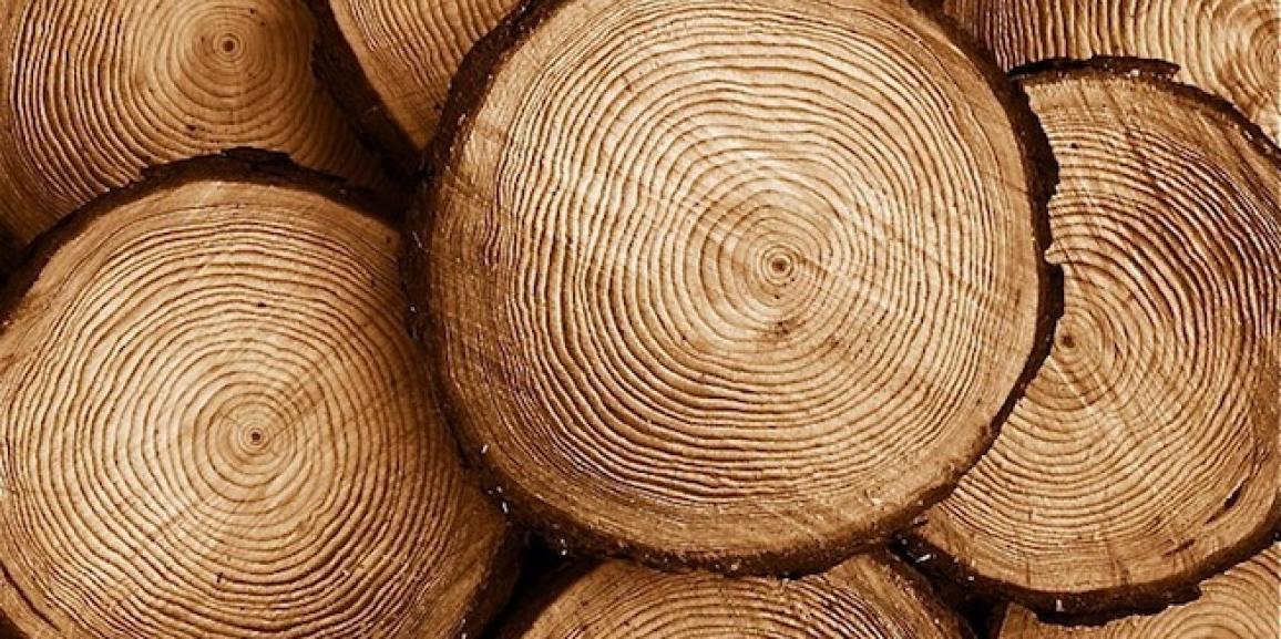 La madera; características y variedades